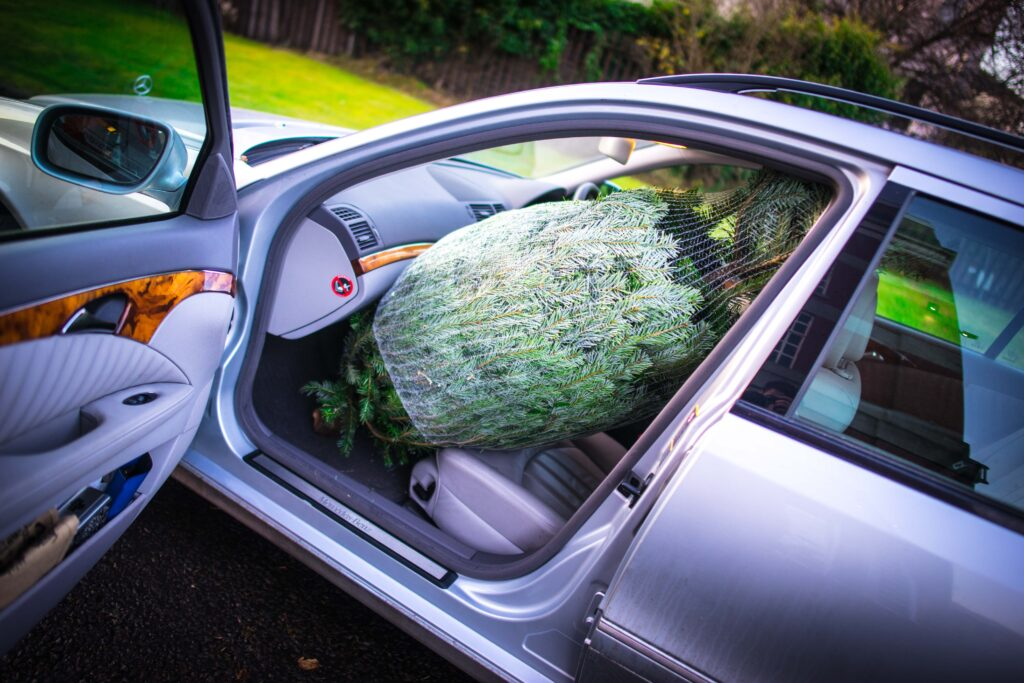 Christmas Tree in Car